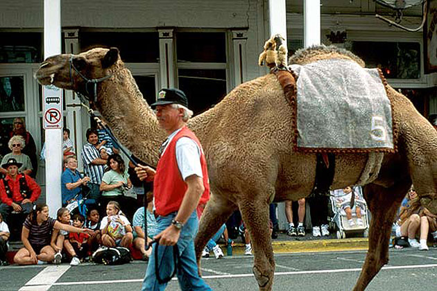 International Camel Races in Virginia City